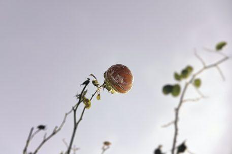 The Lollipop Fields