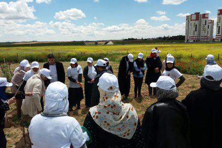 Field Diagnosis: Developing Female Entrepreneurship in the Wilaya of Sétif