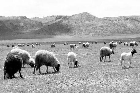Les cultures pastorales dans le bassin méditerranéen