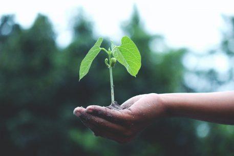 Sustainability: Towards A New Paradigm Of Development In The Euro-Mediterranean Area