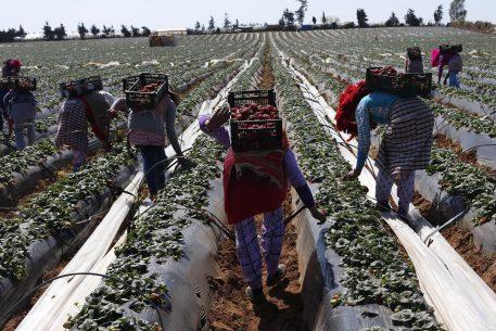 Innovación y tecnología: ¿cuáles son los retos de la agricultura y del mundo rural en el Mediterráneo?